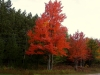 Fall in Lovells Township