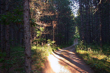 Forest Hike - Lovells Township